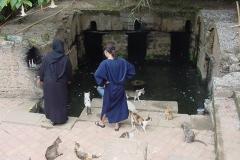 estanque de anguilas