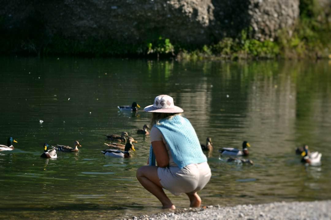 patos en Besalú