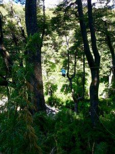 canopy cerro bayo