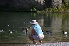 Patos en el rio